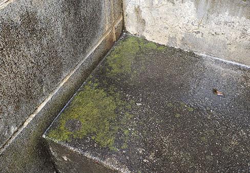 「玄関外回り洗浄」の施工前写真